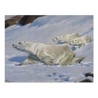 Mother Polar Bear and Cubs Postcard