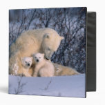 Mother Polar Bear Sitting with Twins, Binder