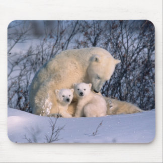 Mother Polar Bear Sitting with Twins, Mouse Pad