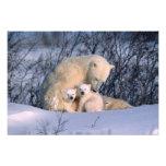 Mother Polar Bear Sitting with Twins, Photo Print