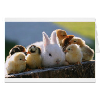 Mother Rabbit Adopts Some Chicks Card