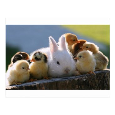 Toddler & Baby themed Mother Rabbit Adopts Some Chicks Postcard