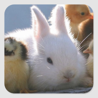 Mother Rabbit Adopts Some Chicks Square Sticker