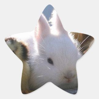 Mother Rabbit Adopts Some Chicks Star Sticker