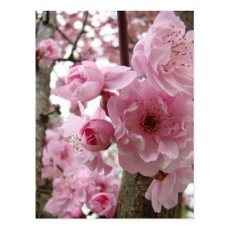 MOTHER'S DAY 12 POSTCARDS Spring BLOSSOMS Mothers