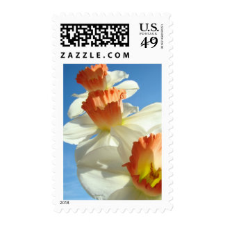 MOTHER'S DAY GIFTS 2 CARDS NARCISSUS Flowers Sky Stamp