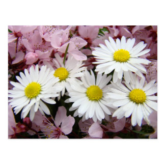 MOTHER'S DAY GIFTS 32 Blossoms Daisies Mom Mothers Post Card