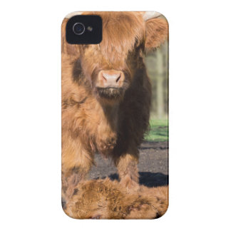 Mother scottish highlander cow near newborn calf iPhone 4 cover