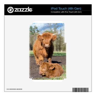 Mother scottish highlander cow near newborn calf skins for iPod touch 4G