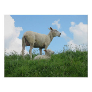 Mother Sheep and Her Lamb Grass Photo Poster Print