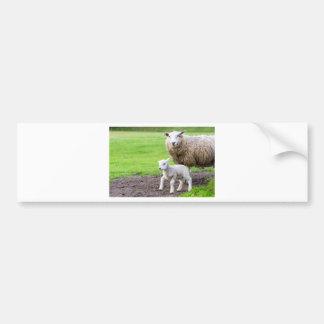 Mother sheep and newborn lamb in meadow bumper sticker