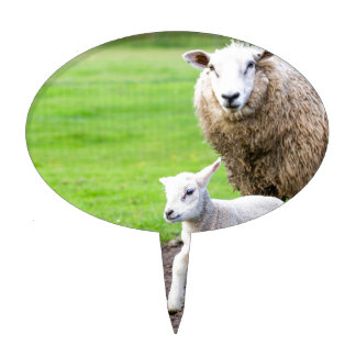 Mother sheep and newborn lamb in meadow cake topper