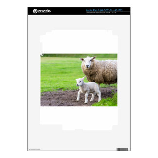 Mother sheep and newborn lamb in meadow decals for iPad 3