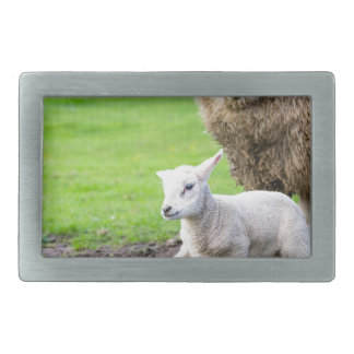 Mother sheep and newborn lamb in meadow rectangular belt buckle