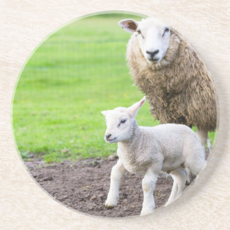 Mother sheep and newborn lamb in meadow sandstone coaster