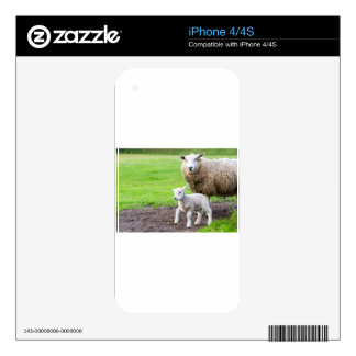 Mother sheep and newborn lamb in meadow skins for iPhone 4S