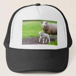 Mother sheep and newborn lamb in meadow trucker hat