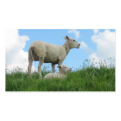 Mother Sheep & Her Lamb Grass Photo Poster Print profilecard