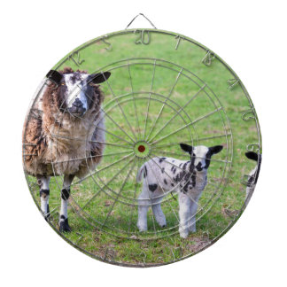 Mother sheep with two newborn lambs in spring dartboard with darts