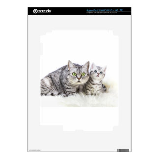 Mother silver tabby cat with young kitten.jpg iPad 3 decals