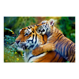 Mother Tiger with Baby Cub Climbing and Biting Ear Poster