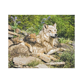 Mother Wolf with 2 Cubs Picture Gallery Wrapped Canvas Print