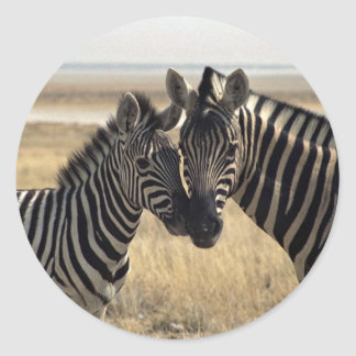 Mother zebra and young zebra classic round sticker