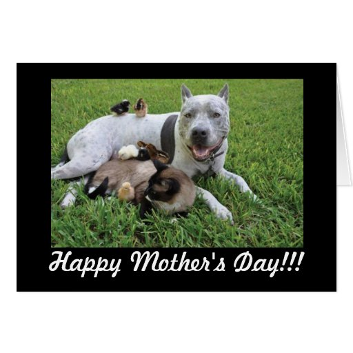 Mother's Day Animal Lover Fur Baby Mom Card