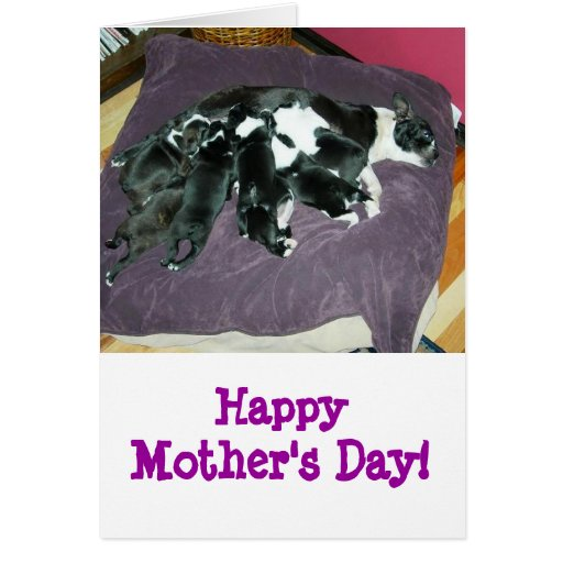 Mother's Day-Boston Terrier card
