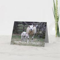 Mother's Day card featuring mother sheep and lambs