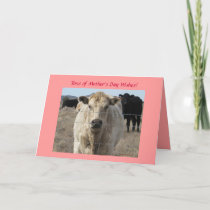 Mother's Day - Cute White Cow - Ranch or Farm Card
