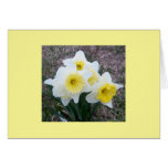 Mother's Day Daffodils Cards