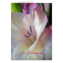 Mother's Day for Grandma, Pink Gladiolus Photo