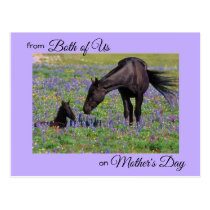 Mother's Day from Both of Us Mare & Foal Photo Postcard