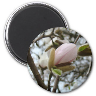 Mothers Day Gifts 19 KEDS SHOES Magnolia Flowers 2 Inch Round Magnet