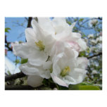 Mothers Day Gifts 48 APPLE BLOSSOMS Flowers Prints Poster