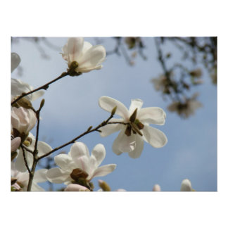 MOTHER'S DAY GIFTS ART Magnolia Tree Flowers Poster