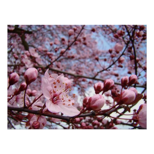 MOTHERS DAY GIFTS Spring Blossoms Art Prints Poster
