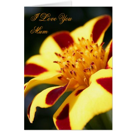 Mother's Day Jolly Jester Marigold card