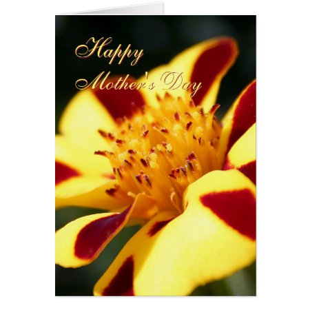 Mothers Day Jolly Jester Marigold greetings card