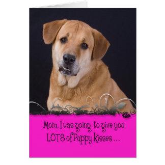 Mother's Day Licker License - Sundance Card
