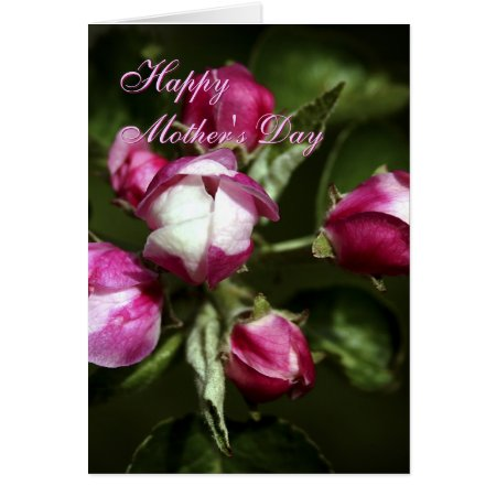 Mothers Day Pink Cherry Buds greetings card