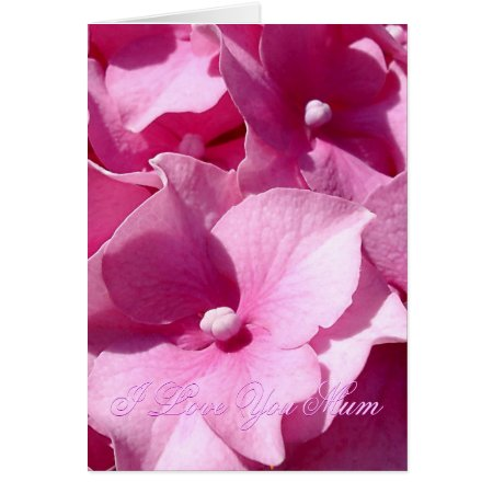 Mother's Day Pink Hydrangea card