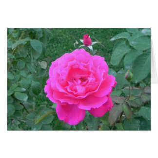 Mother's Day Pink Rose Greeting Cards
