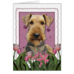 Mothers Day - Pink Tulips - Airedale Greeting Card