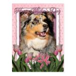 Mothers Day - Pink Tulips - Australian Shepherd Postcard