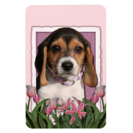 Mothers Day - Pink Tulips - Beagle Puppy Rectangular Photo Magnet
