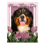 Mothers Day - Pink Tulips - Bernese Mountain Dog Postcard