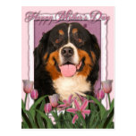 Mothers Day - Pink Tulips - Bernese Mountain Dog Postcards