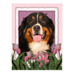Mothers Day - Pink Tulips - Bernese Mountain Dog Post Card